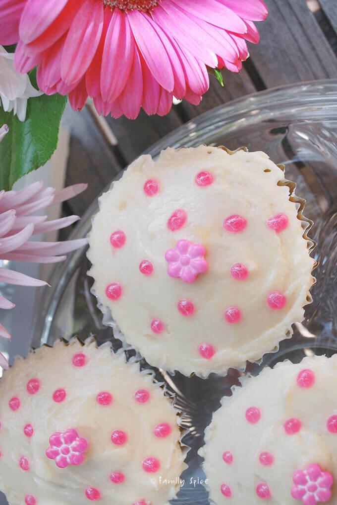 Olive Oil Vanilla Cupcakes by FamilySpice.com