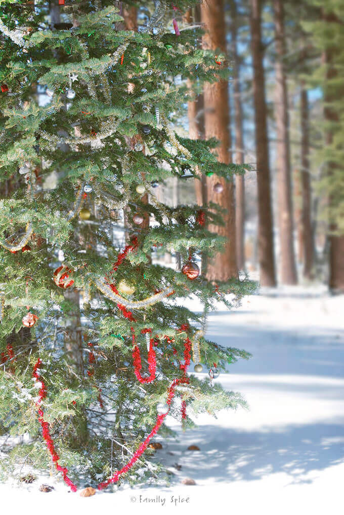 A tree decorated with Christmas decorations in the snowy forest by FamilySpice.com