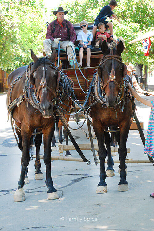 horse_carriage_500
