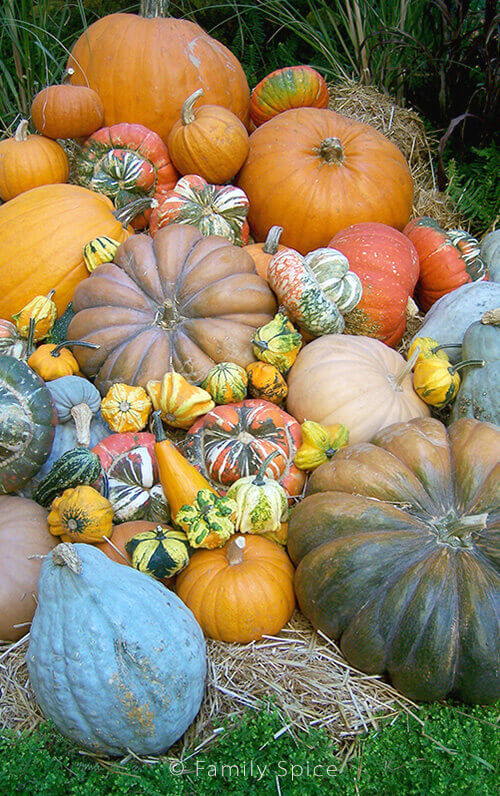 Assorted Pumpkins and Gourds by FamilySpice.com