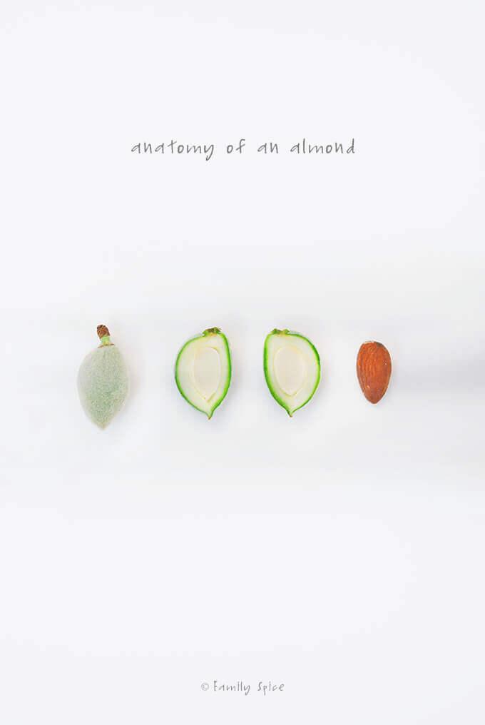 Green Almonds (Chaghaleh Badoom) by FamilySpice.com