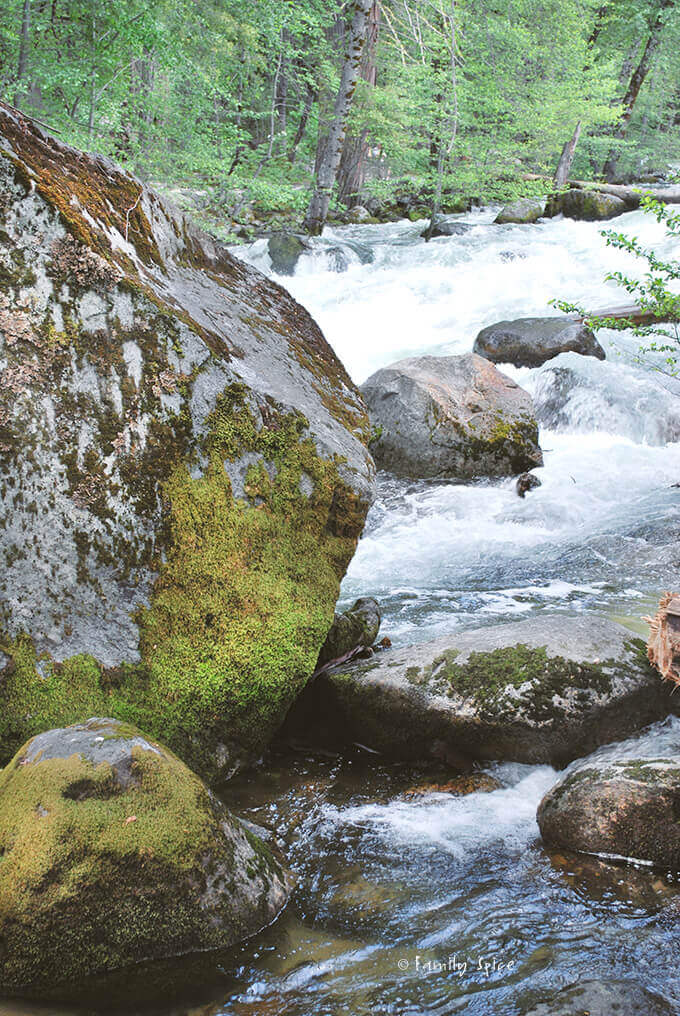 Yosemite National Park by FamilySpice.com