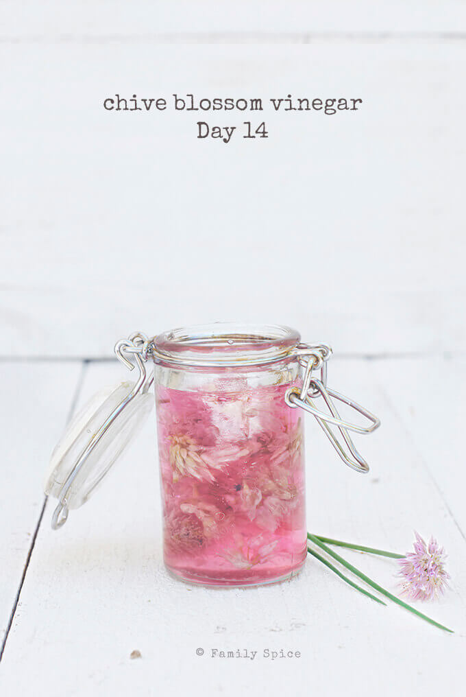 How to Make Herb Infused Vinegars, like this Chive Blossom Vinegar by FamilySpice.com