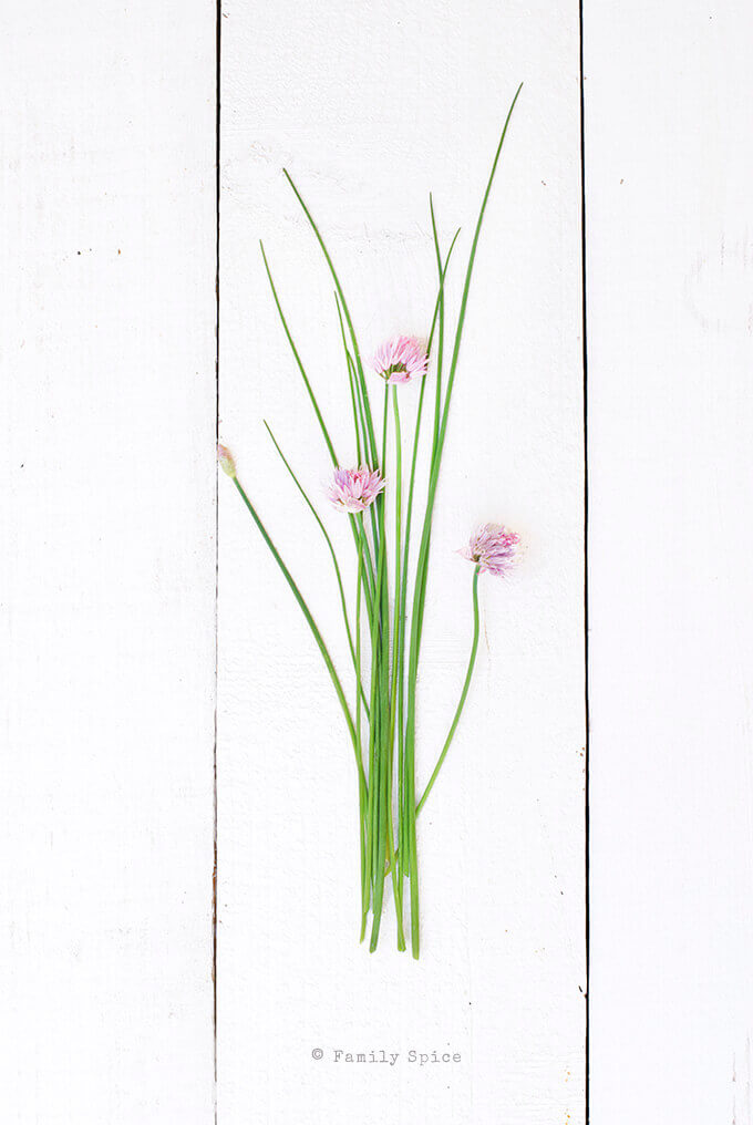 Chives and Chive Blossoms by FamilySpice.com