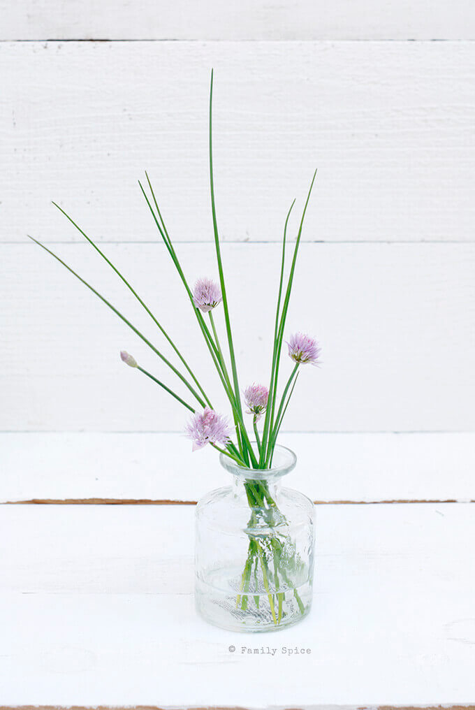 Chive Blossoms by FamilySpice.com