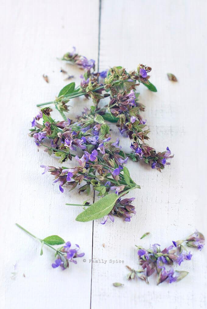 Sage Blossoms by FamilySpice.com