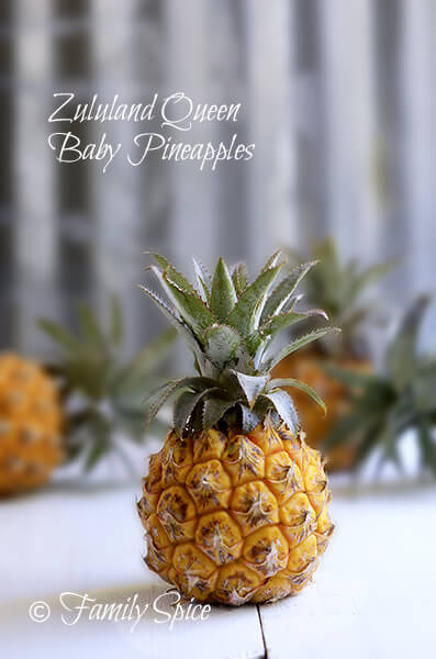 Zululand Queen Baby Pineapples