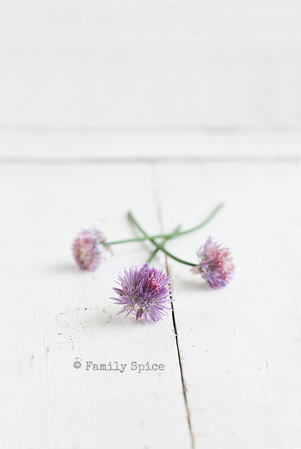 Chive Blossoms for Portobello and Asparagus Quiche by FamilySpice.com