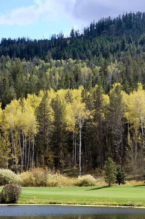 fall_trees_teton2_500