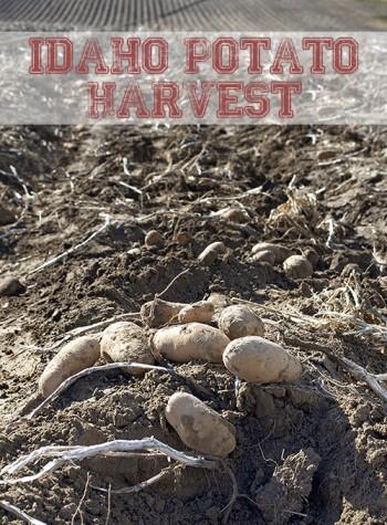 Idaho Potato Harvest Tour 2014 #IdahoHarvest by FamilySpice.com