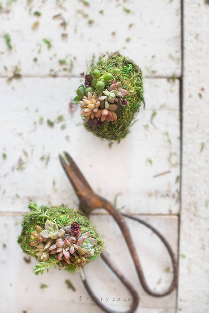 DIY Moss Covered Succulent Eggs for Spring by FamilySpice.com