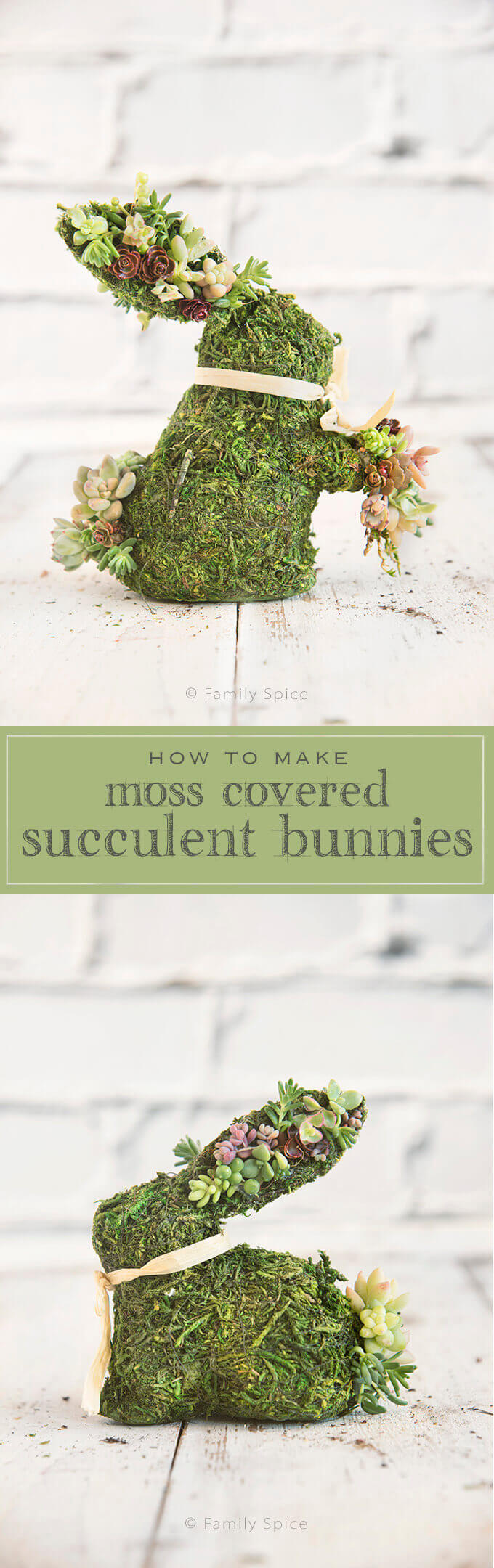 Succulents are hearty plants that require little water, making them the perfect crafting accessory for these Moss Covered Succulent Bunnies -- a beautiful way to celebrate spring!  by FamilySpice.com