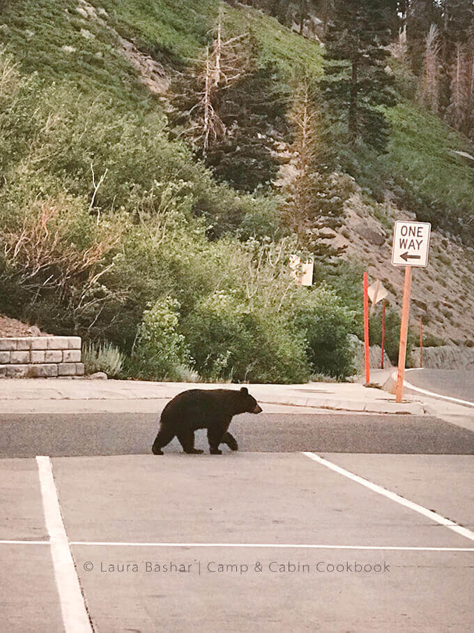 Grizzly bear in Mammoth Lakes, CA by FamilySpice.com