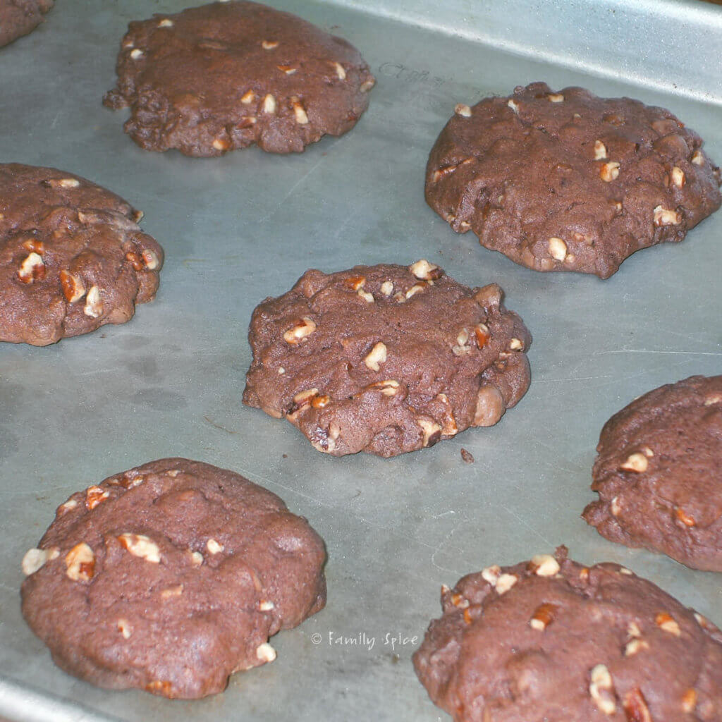 Freshly baked chocolate pudding cookie dough with nut on a baking sheet