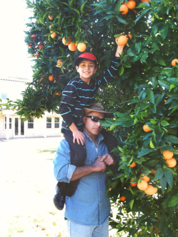 Picking oranges in Valley Center, California