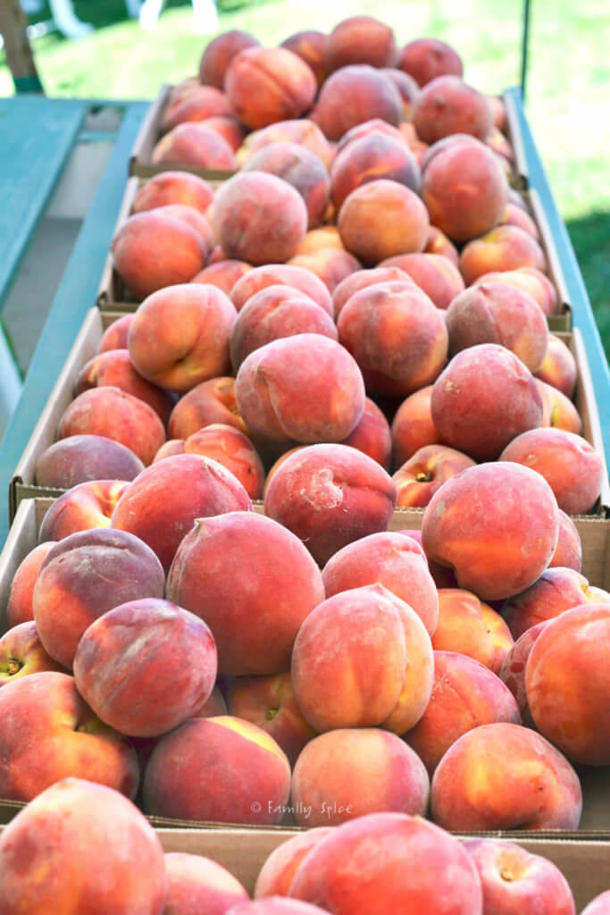 Bins filled with fresh peaches at a farm stand