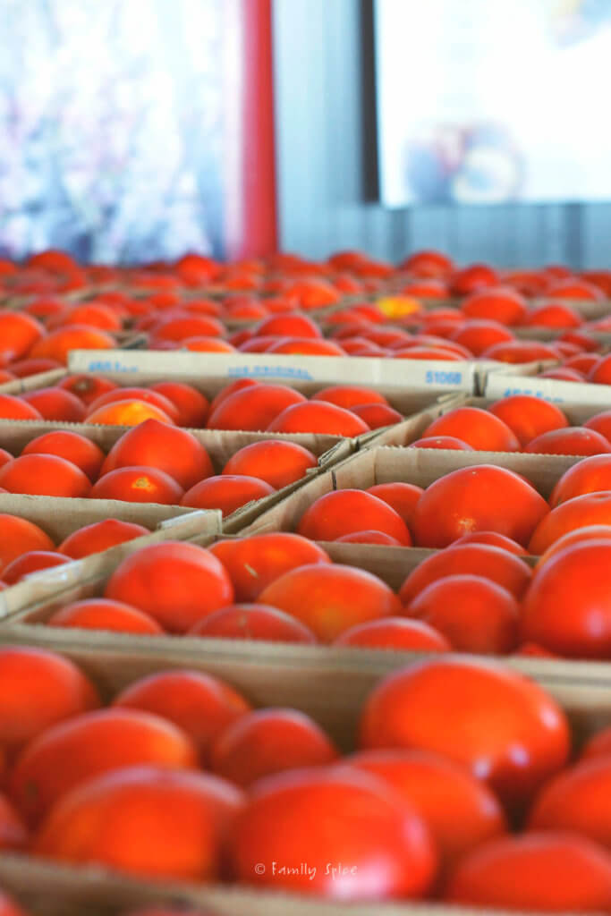 cartons of fresh tomatoes at a farm stand