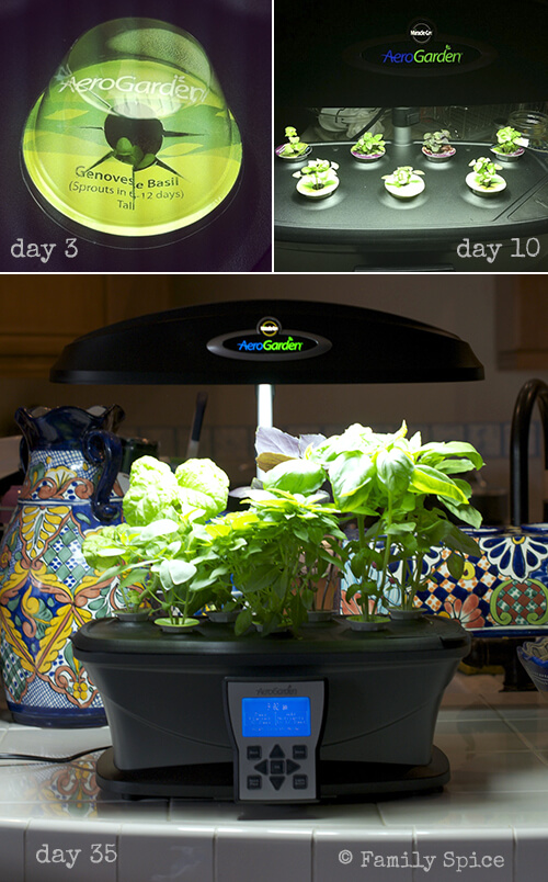 AeroGarden ULTRA Basil for Lemon Cake with Basil and Pomegranate