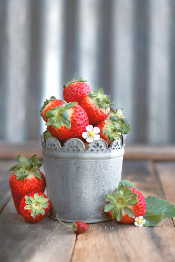 Strawberries with strawberry blooms in a rustic metal container