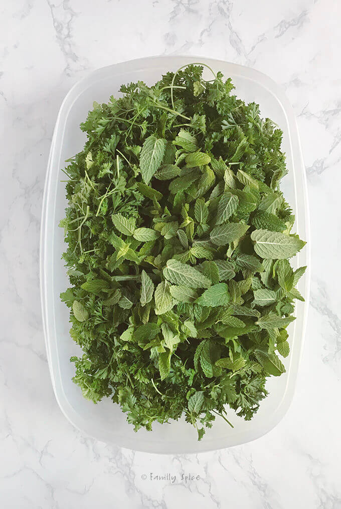 A plastic bin filled with fresh parsley and fresh mint by FamilySpice.com