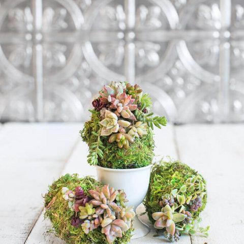 Succulent Moss Eggs by FamilySpice.com