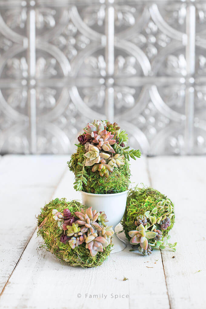 Moss Covered Succulent Eggs