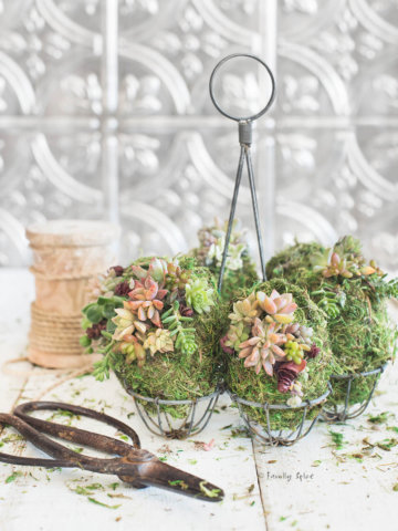 Moss covered eggs with baby succulents attached to them in a rustic egg holder with a pair of metal scissors