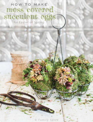 DIY Moss Covered Succulent Eggs for Spring
