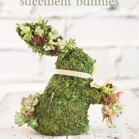 Moss Covered Succulent Bunnies