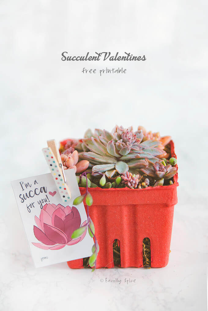 A succulent arrangement in a red berry box with a free succulent valentine printable by FamilySpice.com