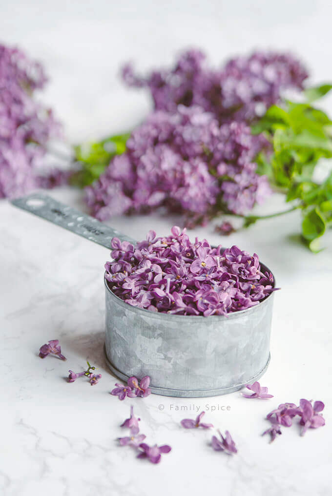 Closeup of a measuring cup full of lilac blossoms by FamilySpice.com