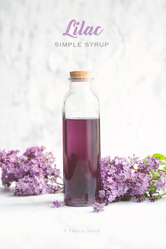 Closeup of a bottle of homemade lilac syrup surrounded by lilacs by FamilySpice.com