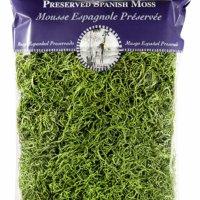 Spanish Moss Preserved